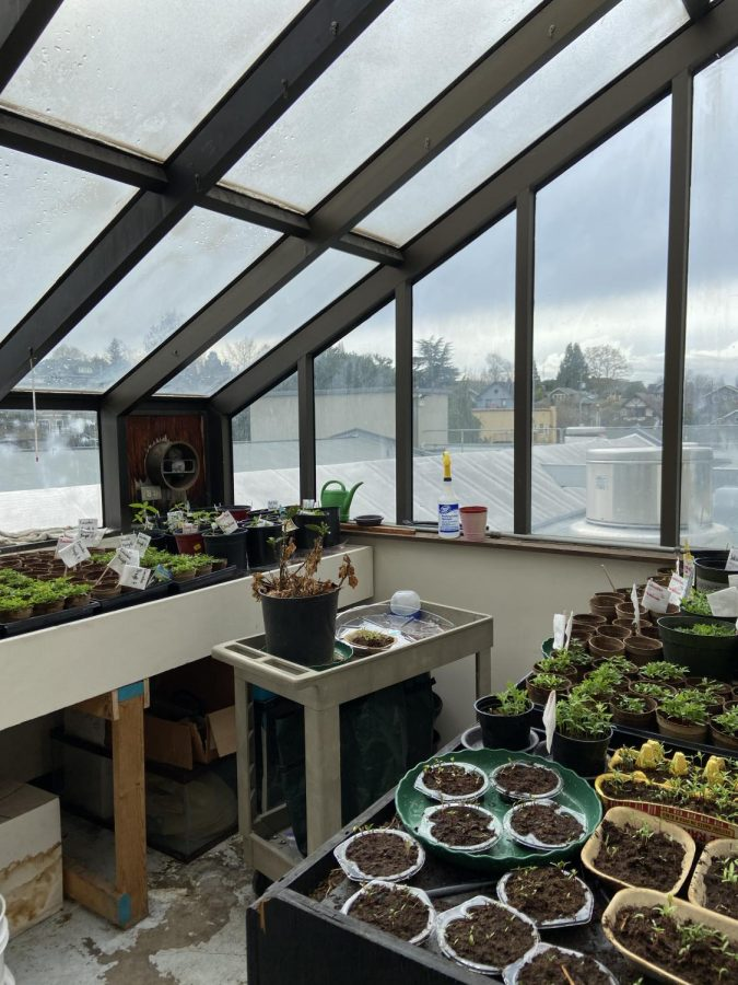 The Seattle Prep Greenhouse, where Mr. Chism currently grows French Marigolds, African Marigolds, Lavender, Rosemary, Cucumber, Dahlias, Cherry Rose Sunflower, Red Sunflower; all started from seed.